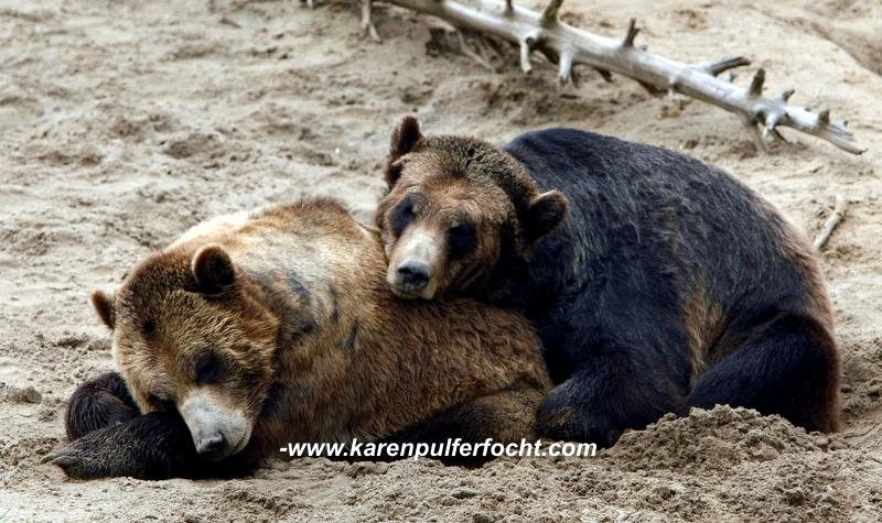 ©Karen Pulfer Focht- Cute Animals050.JPG