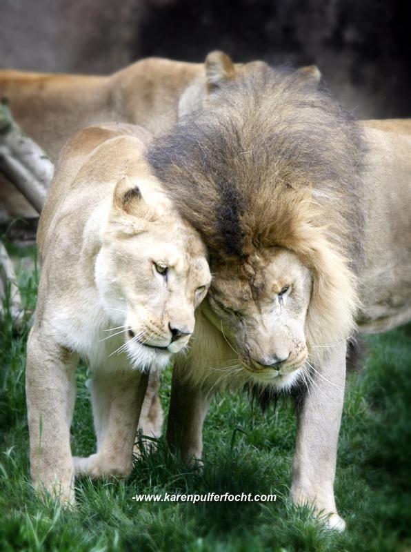 ©Karen Pulfer Focht- Cute Animals049.JPG