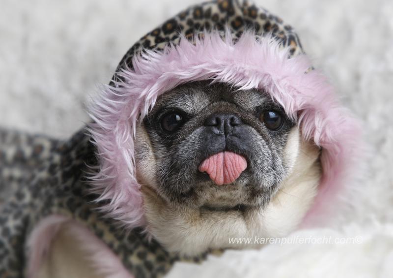 ©Karen Pulfer Focht- Cute Animals054.JPG