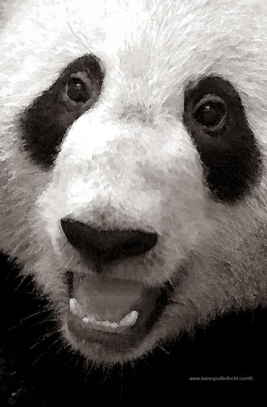©Karen Pulfer Focht- Cute Animals053.JPG