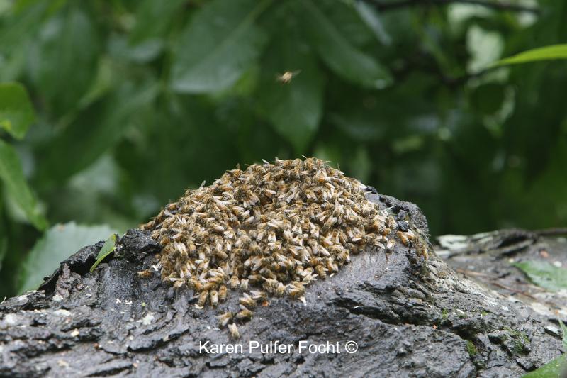 Bee Hive00A.JPG