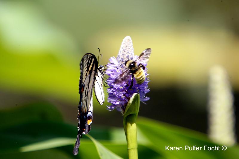 butterfly and beeAA.JPG