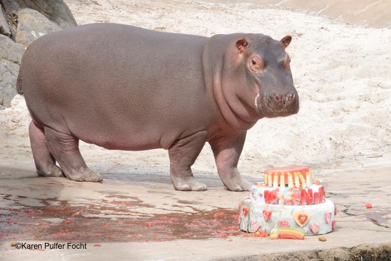03232018 Winnie FIrst Birthday ©Focht 2018 A 313.JPG