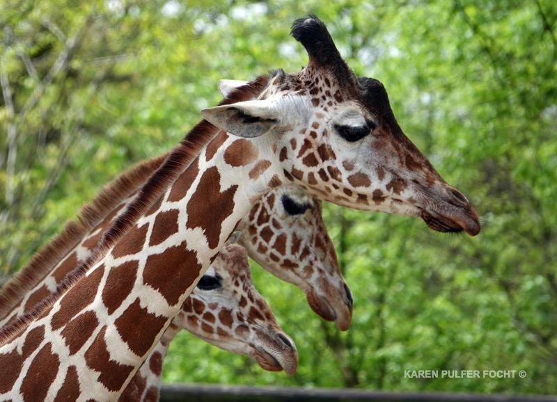 04122019 Memphis Zoo  kpf03.JPG