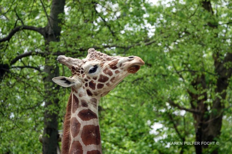 04122019 Memphis Zoo  kpf04.JPG