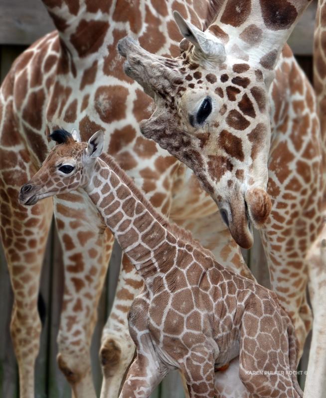 04122019 Memphis Zoo  kpf05.JPG