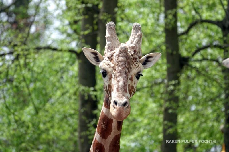 04122019 Memphis Zoo  kpf09.JPG
