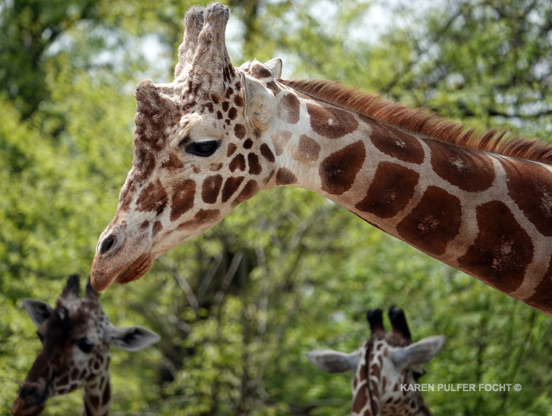 04122019 Memphis Zoo  kpf10.JPG