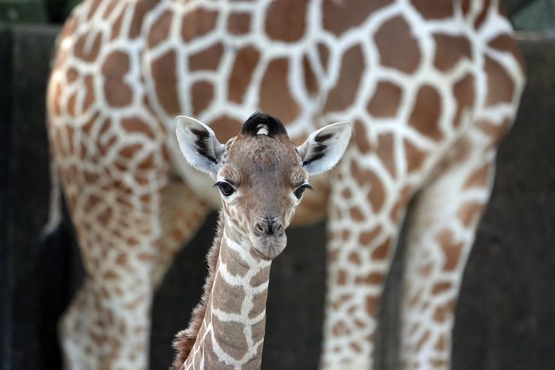 04122019 Memphis Zoo kpf15.JPG