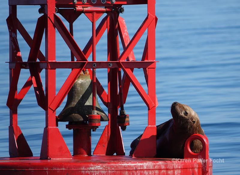 07212019 Steller Seal Lion  246.JPG
