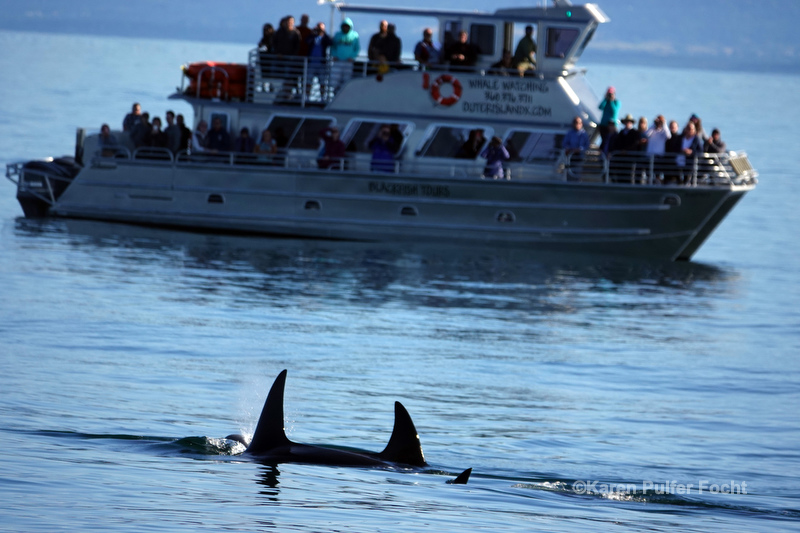 07212019 Whale Watching  249.JPG