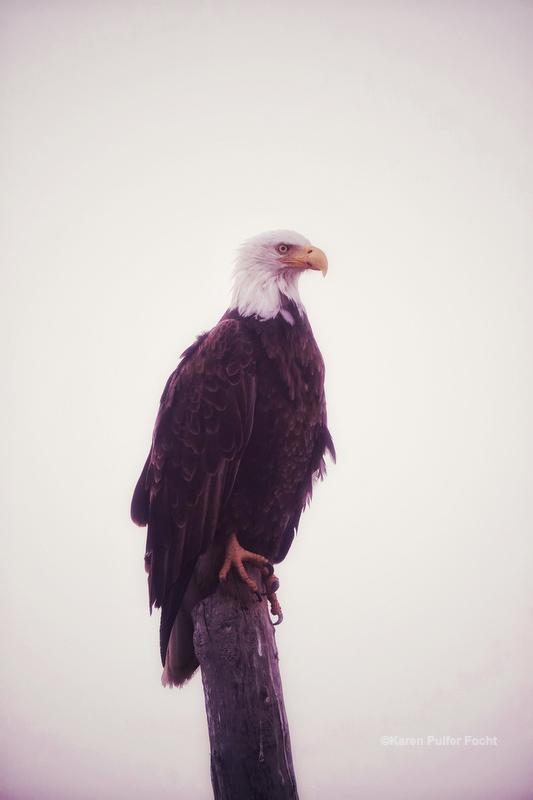 07202019 Bald Eagle © Focht 129.JPG