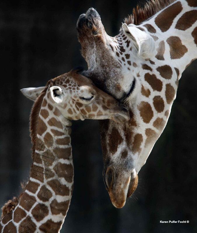 ©Focht- Mothers Love.JPG