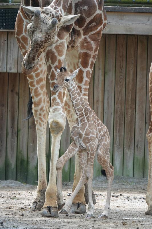 04122019 Memphis Zoo  573.JPG