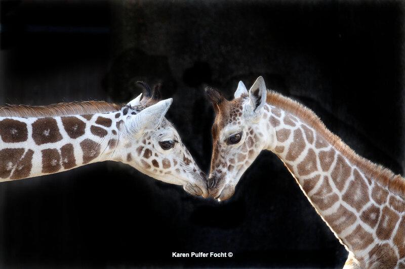 10142017 Memphis Zoo 605ab.JPG