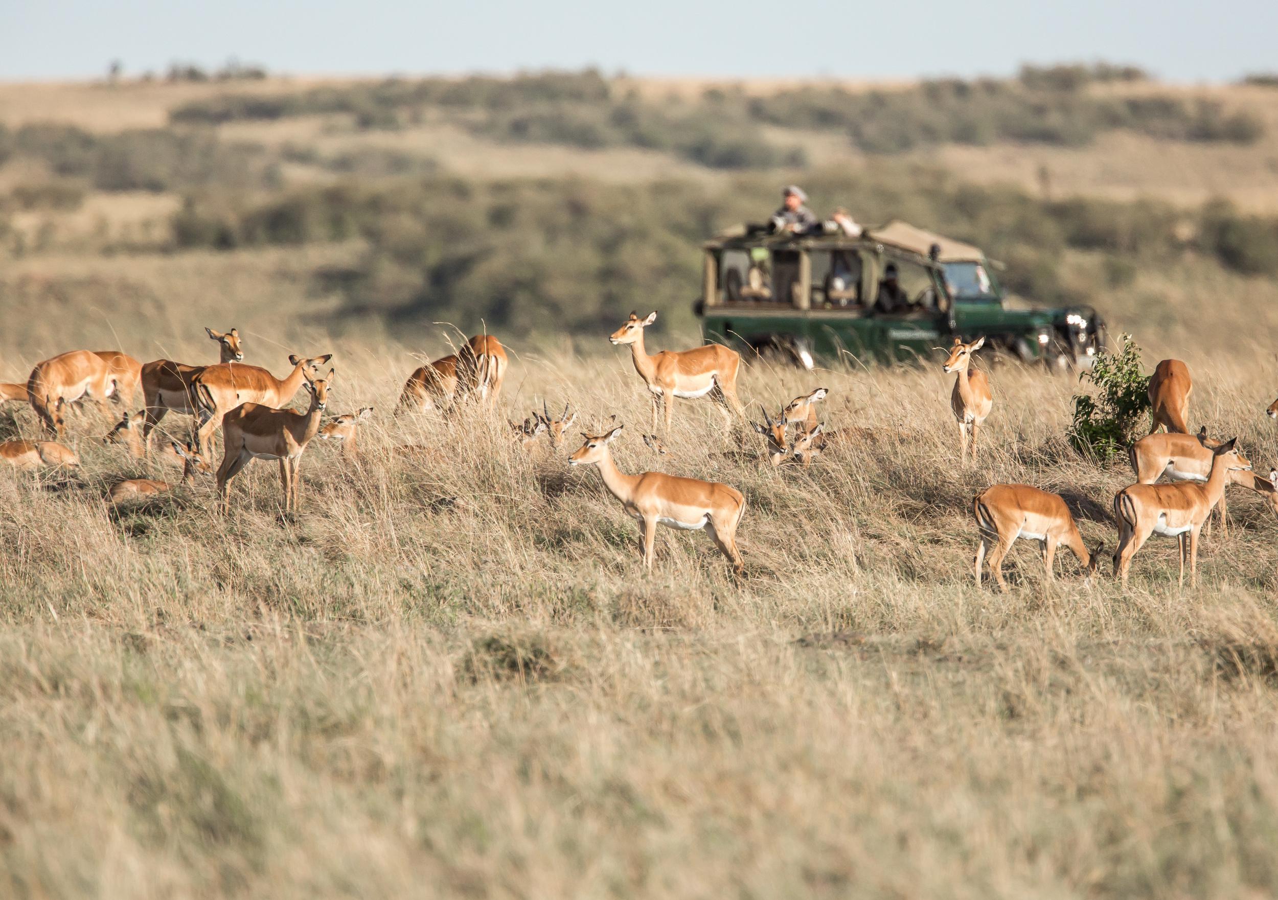 A tranquil safari scene in Kenya