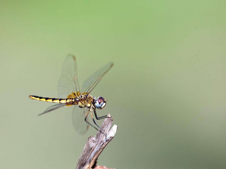 Dragonflies make great target practise.