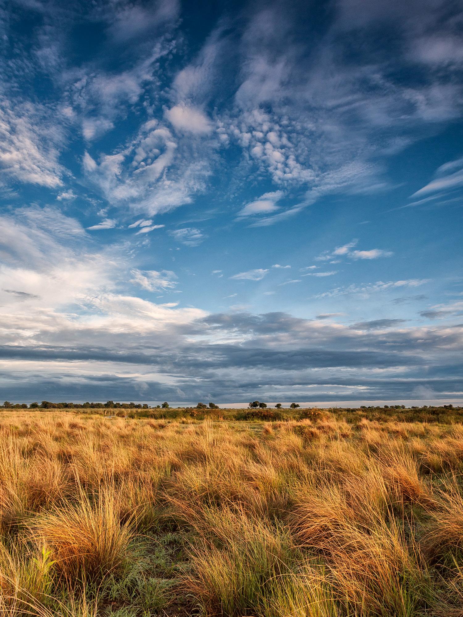 Morning light over Botswana.