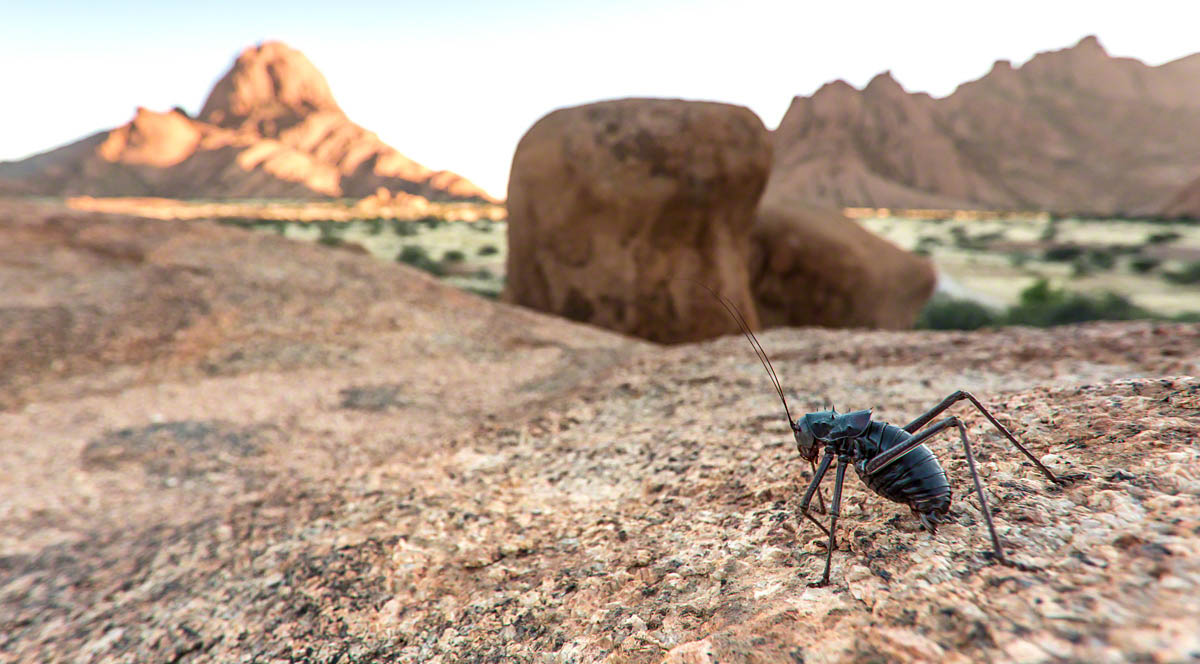 Bush Cricket and Spitzkoppe - Canon 5D Mark   III, 17-40mm @ 17, f5.6, 1/125 sec, ISO 320