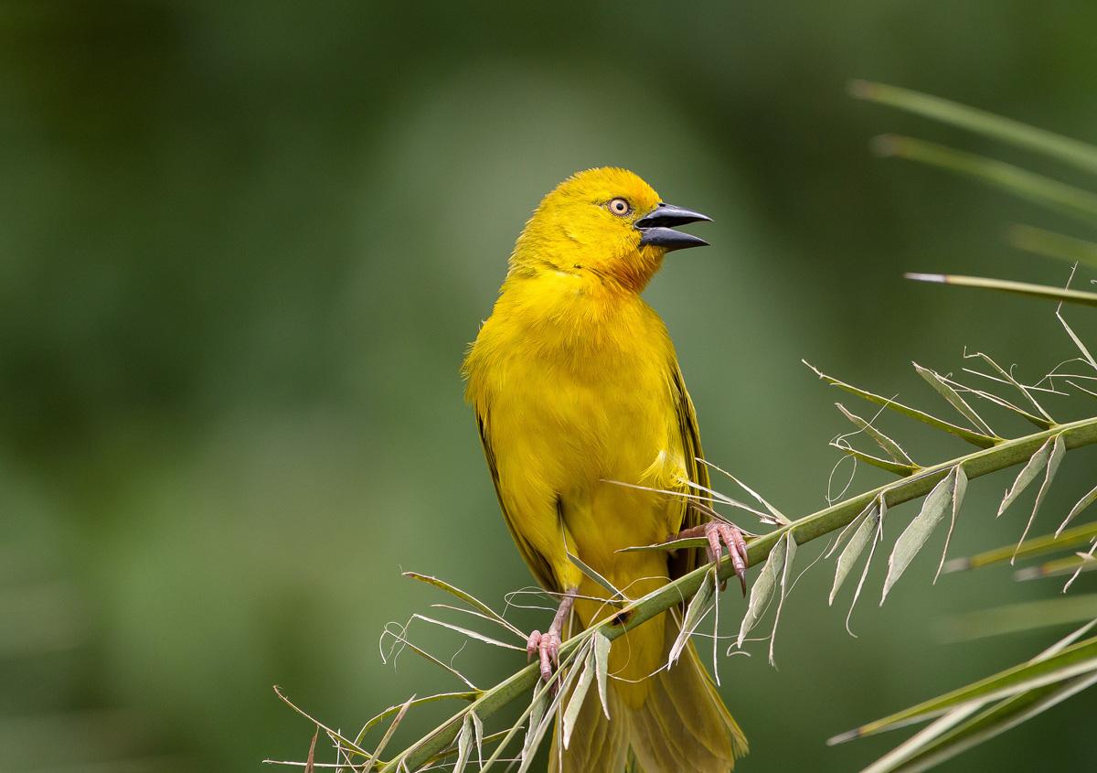 Birds make wonderful practice for learning your AF system.