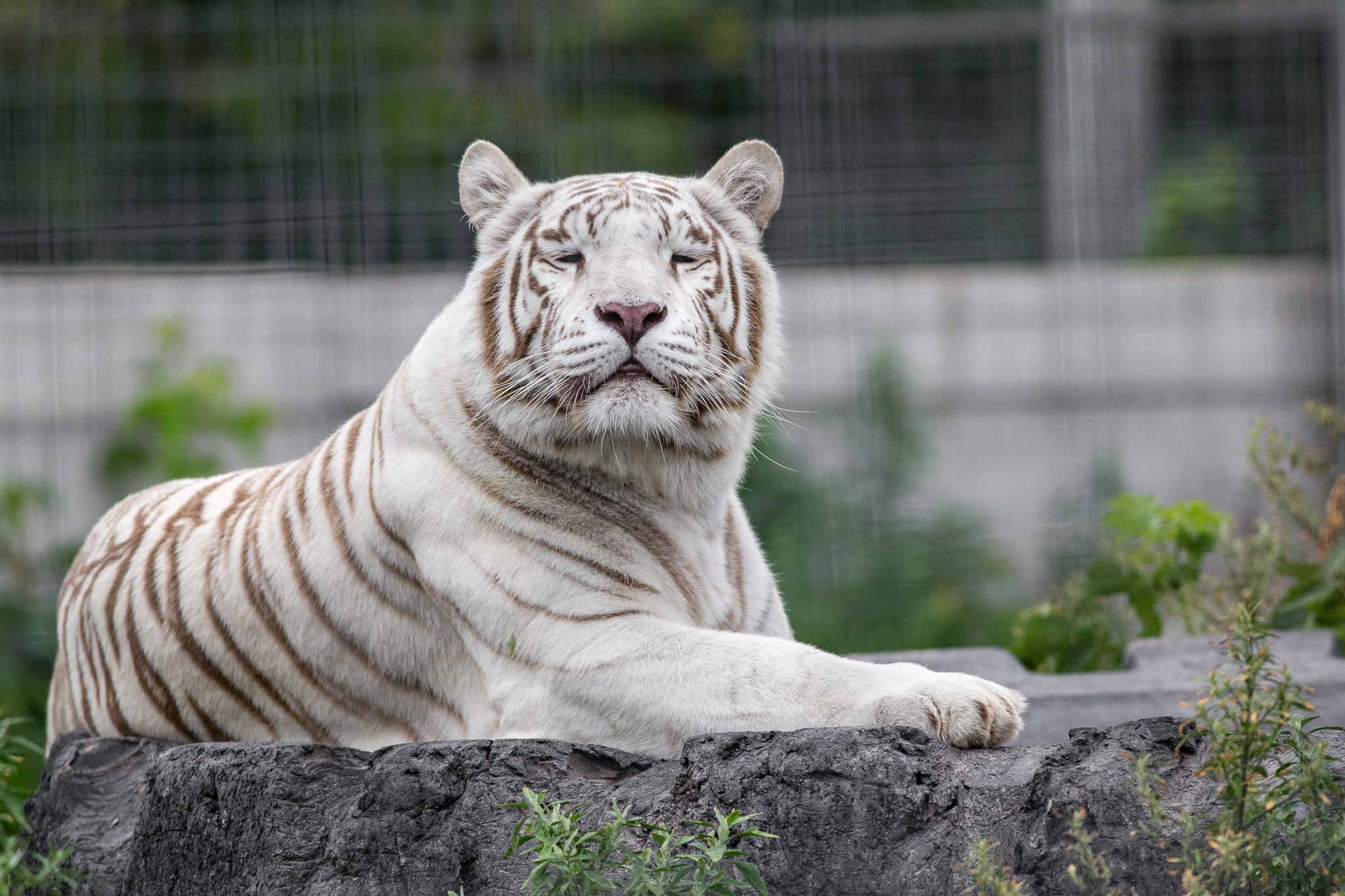 bigcats-20150808115903.jpg