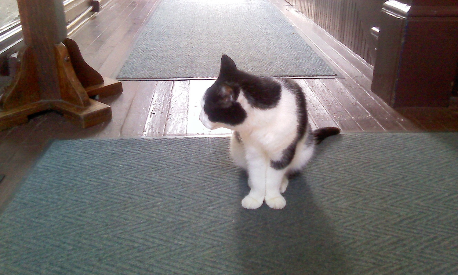 This is camera-shy Sugar, who greeted visitors to the Shirley Plantation gift shop.