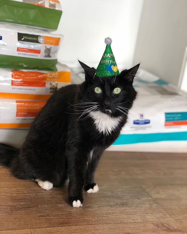 Wishing Bobbi a Happy 5th Birthday today!! 🥳 We love you!💙 . . . . #cliniccat #catsofinstagram #catstagram #catoftheday #happybirthday #catbirthday