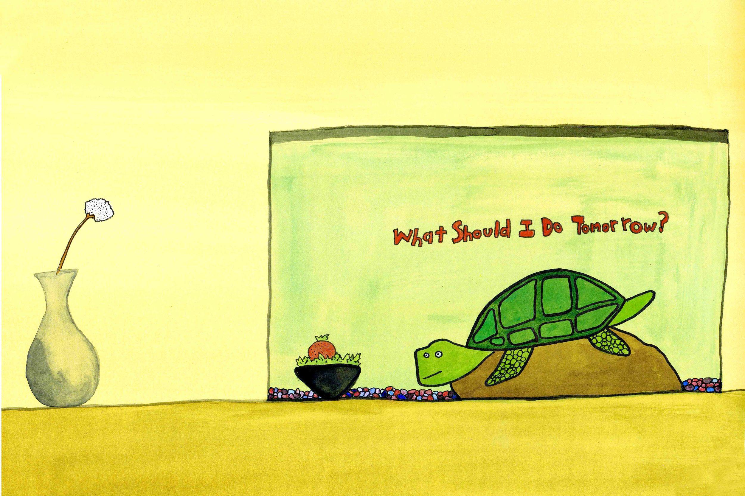 turtle what should I do Final.jpg
