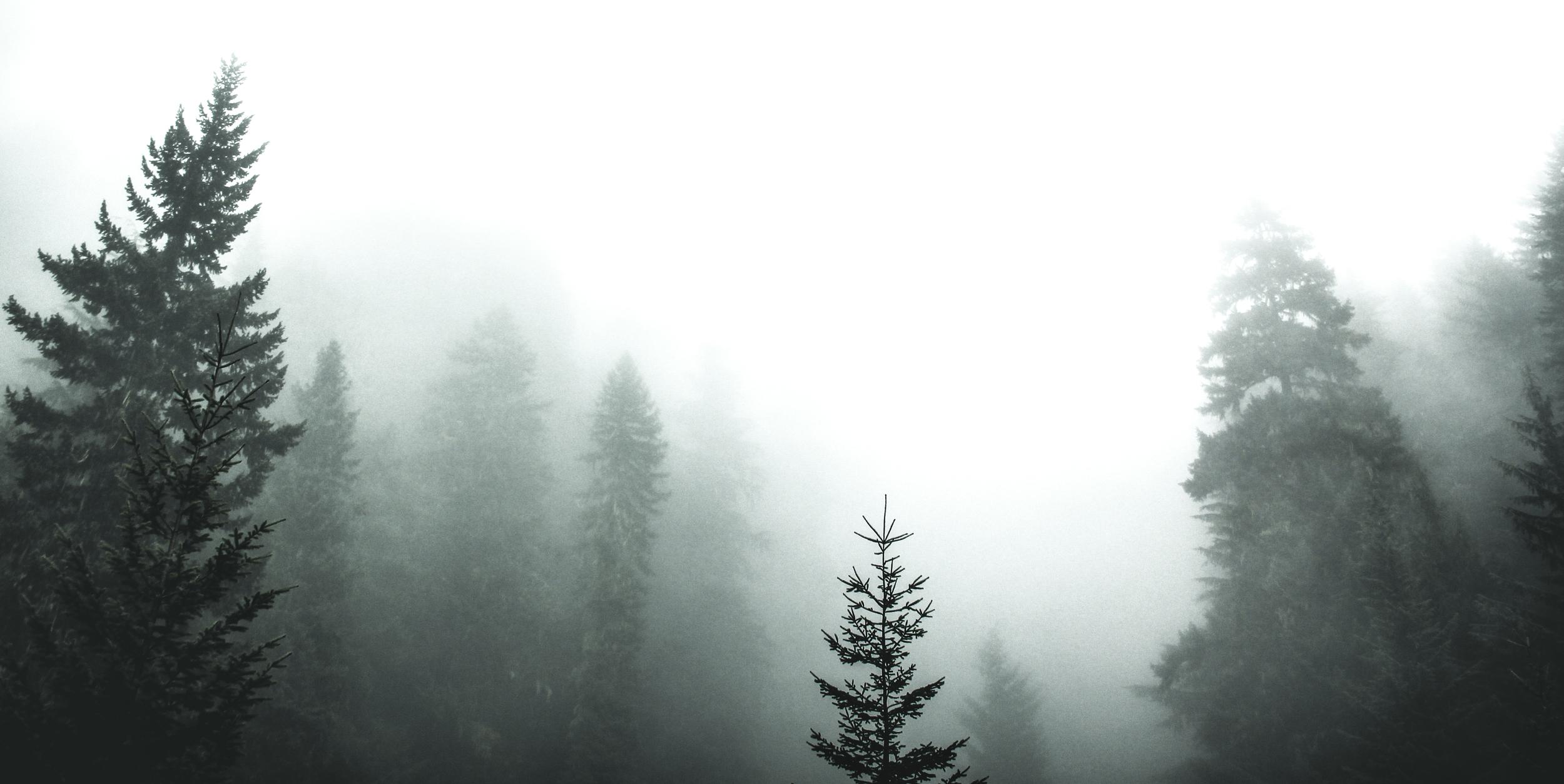 white (2)-2.jpg