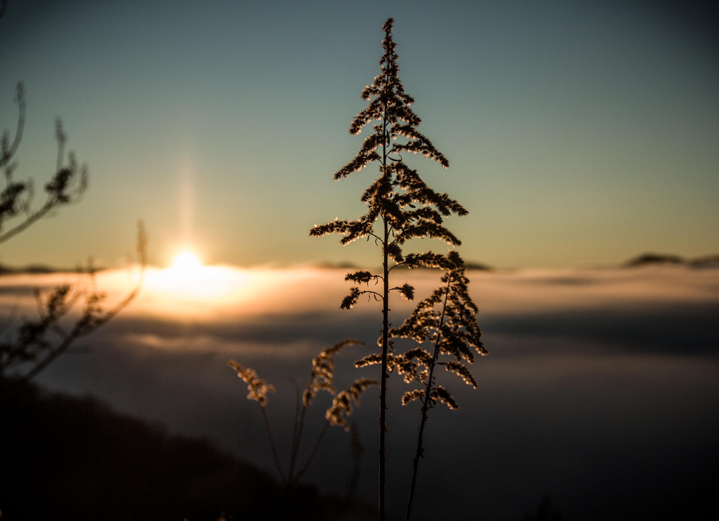 sun (3).jpg