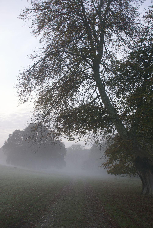 Tree and mist.jpg