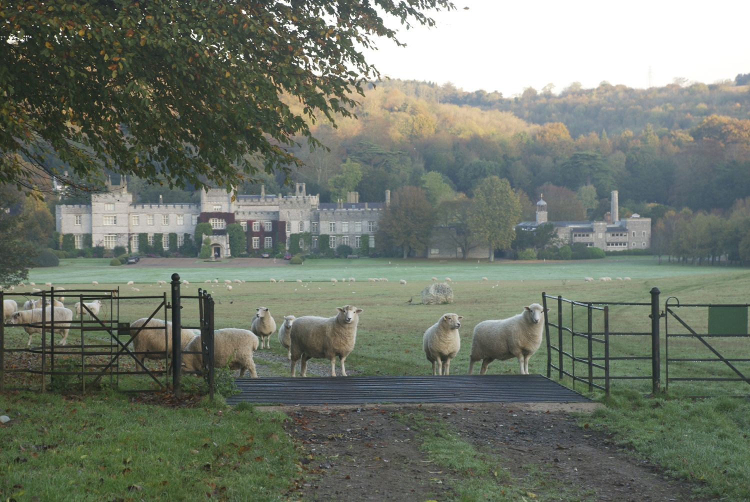 West Dean sheep.jpg