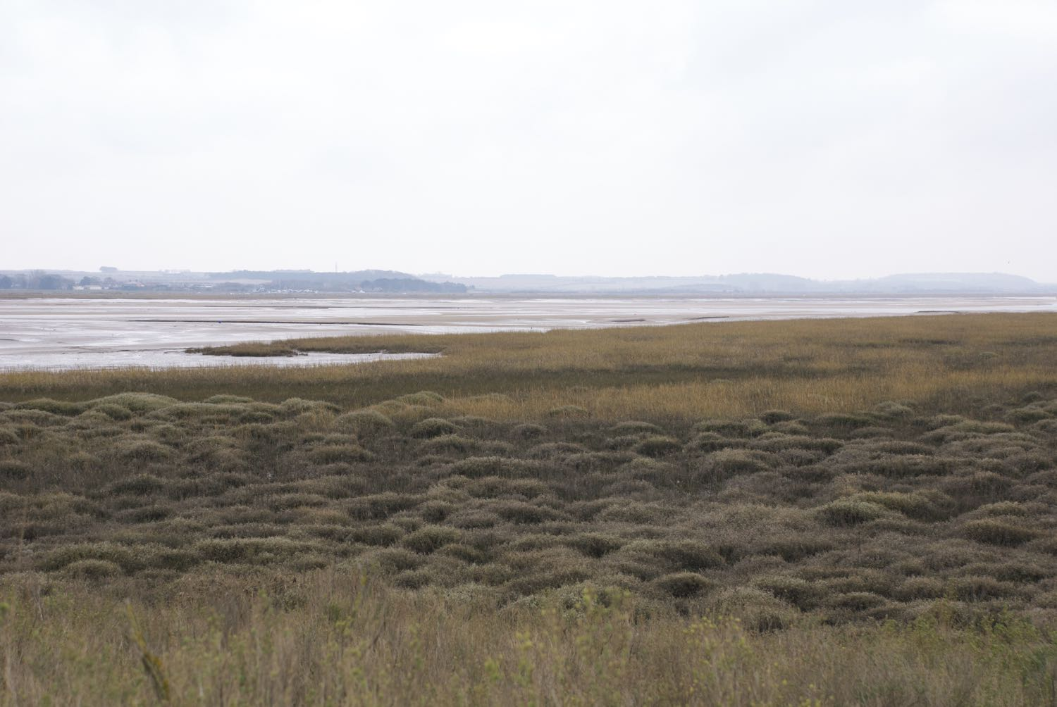 Blakeney Saltmarsh edge.jpg