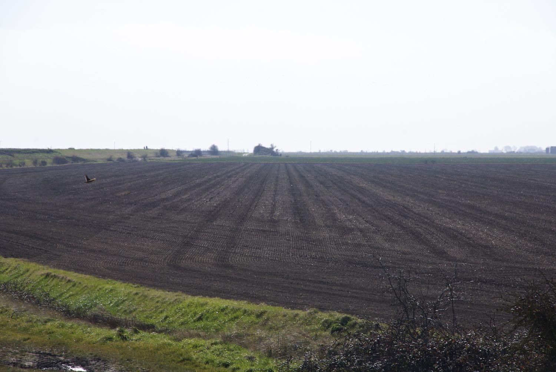 Dengie farmland.jpg