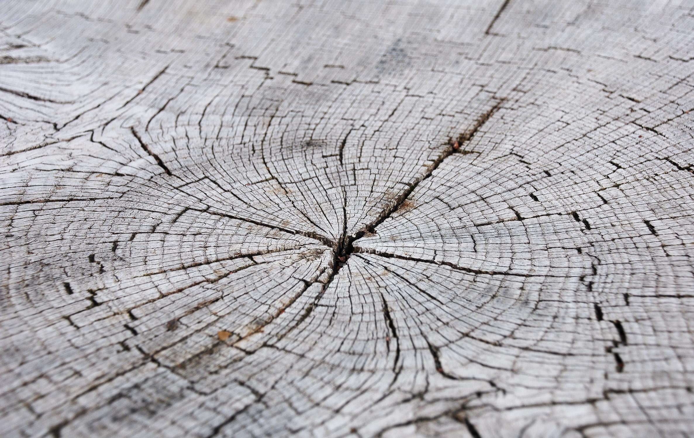 tree lines