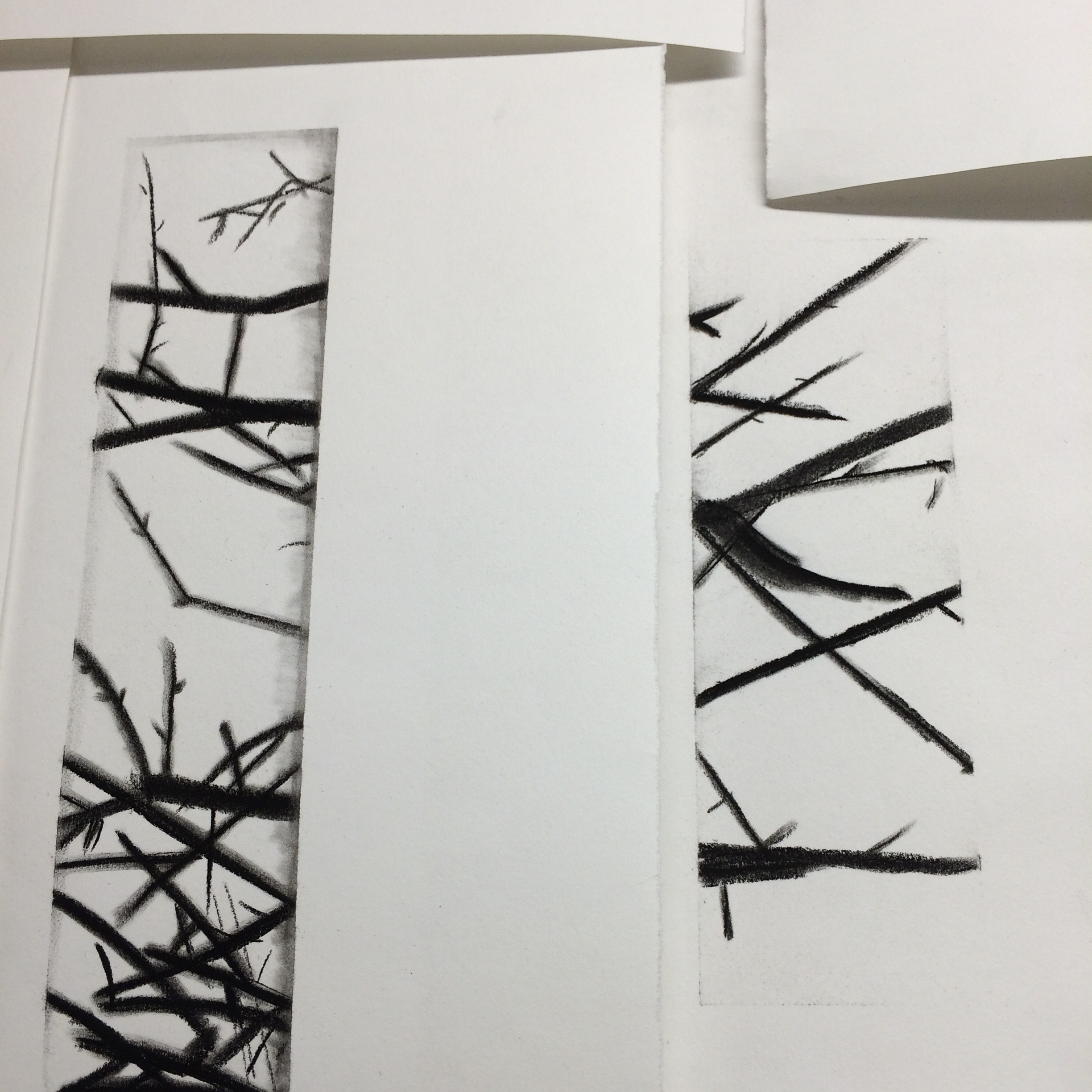 Hedge drawings - charcoal