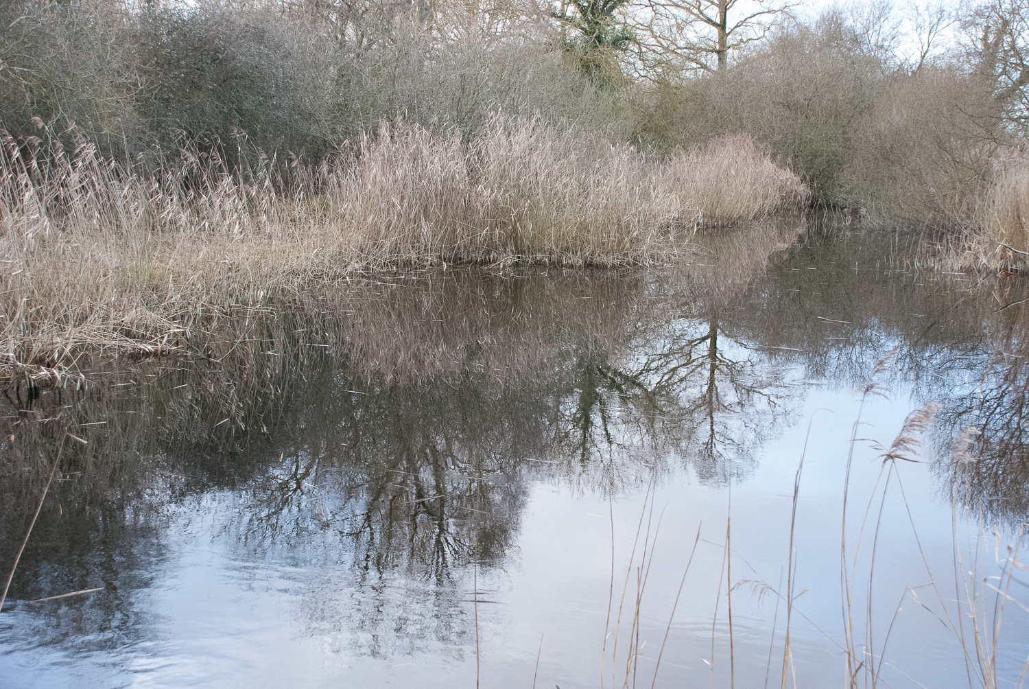 Wicken Fen Helen Terry January2017-1.jpg