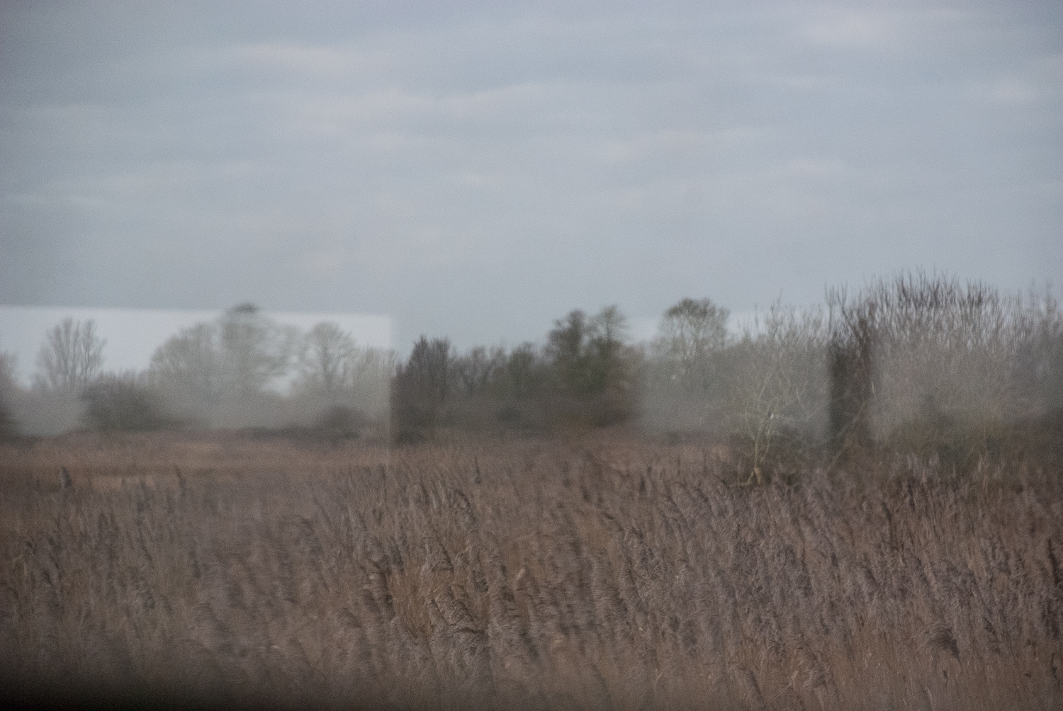 Hide Reflections Wicken Fen Helen Terry January2017-1.jpg