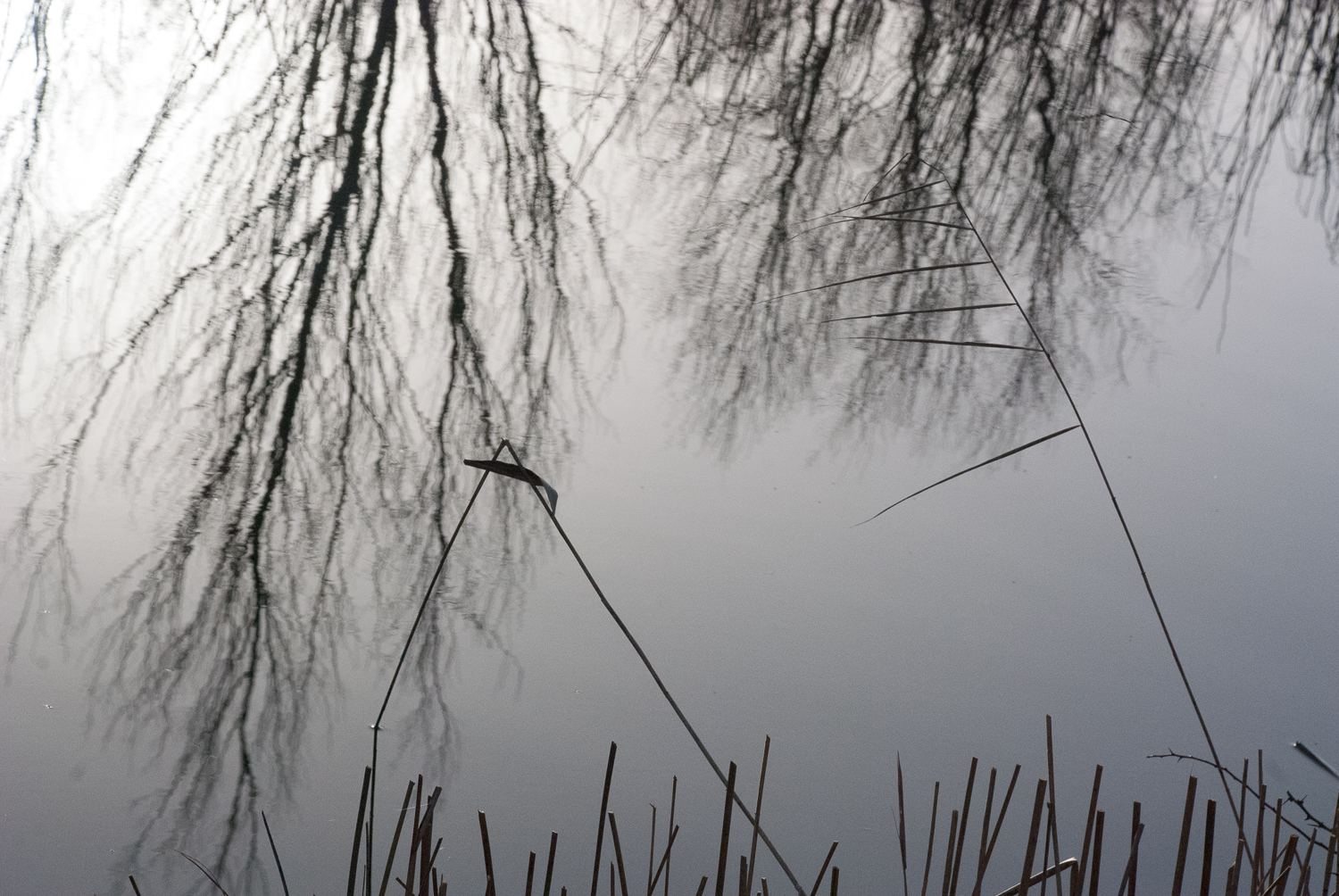 Reflections Wicken Fen Helen Terry January2017-1-6.jpg
