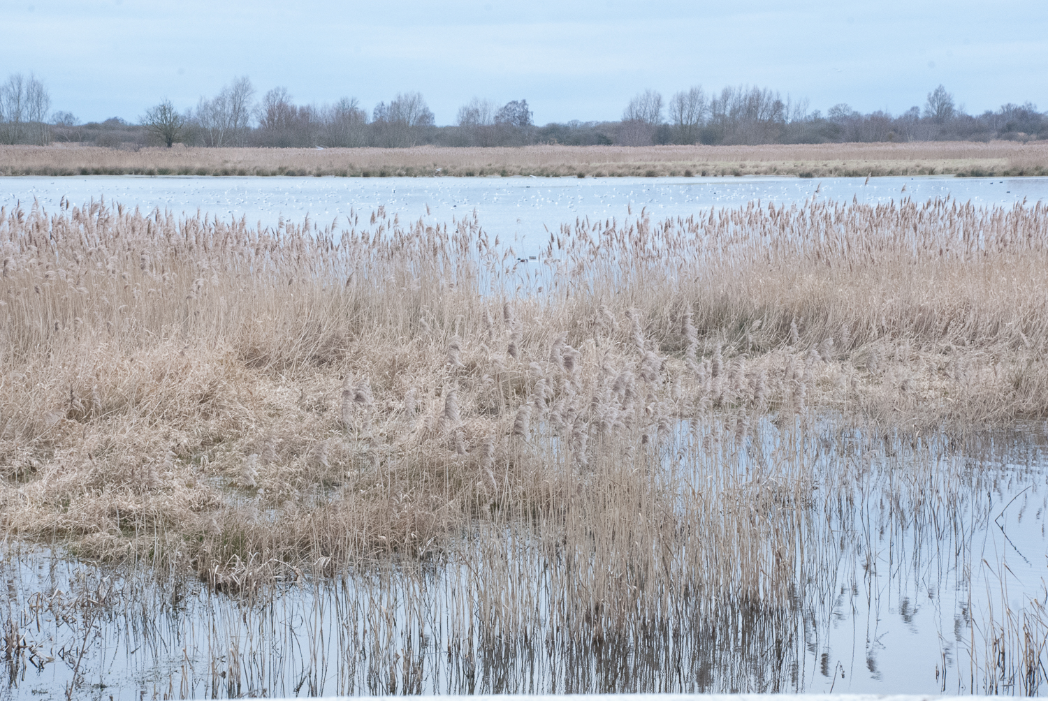 Colours 5 Wicken Fen Helen Terry February2017.jpg