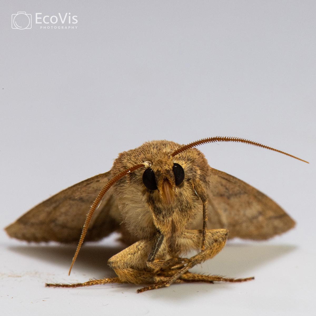 moths0202water.jpg