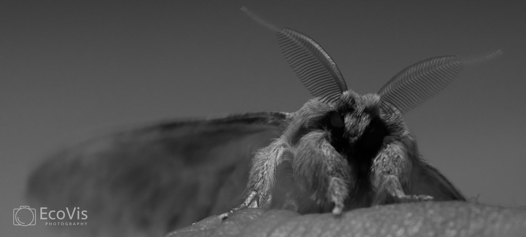 moths0193water.jpg