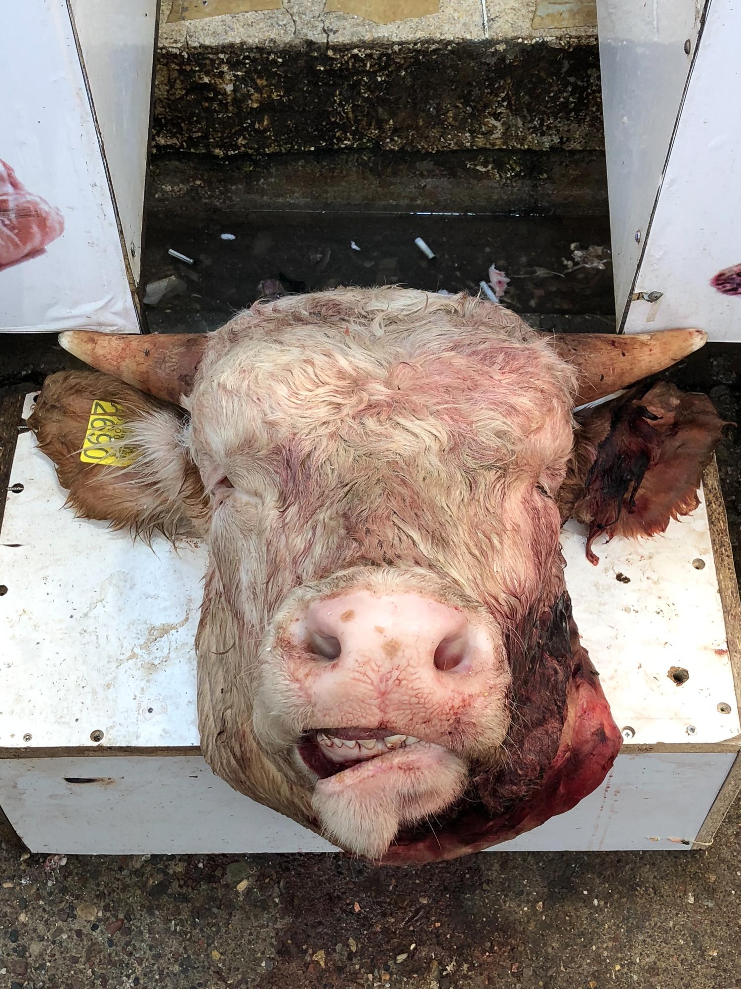 Cow head in Erbil bazaar