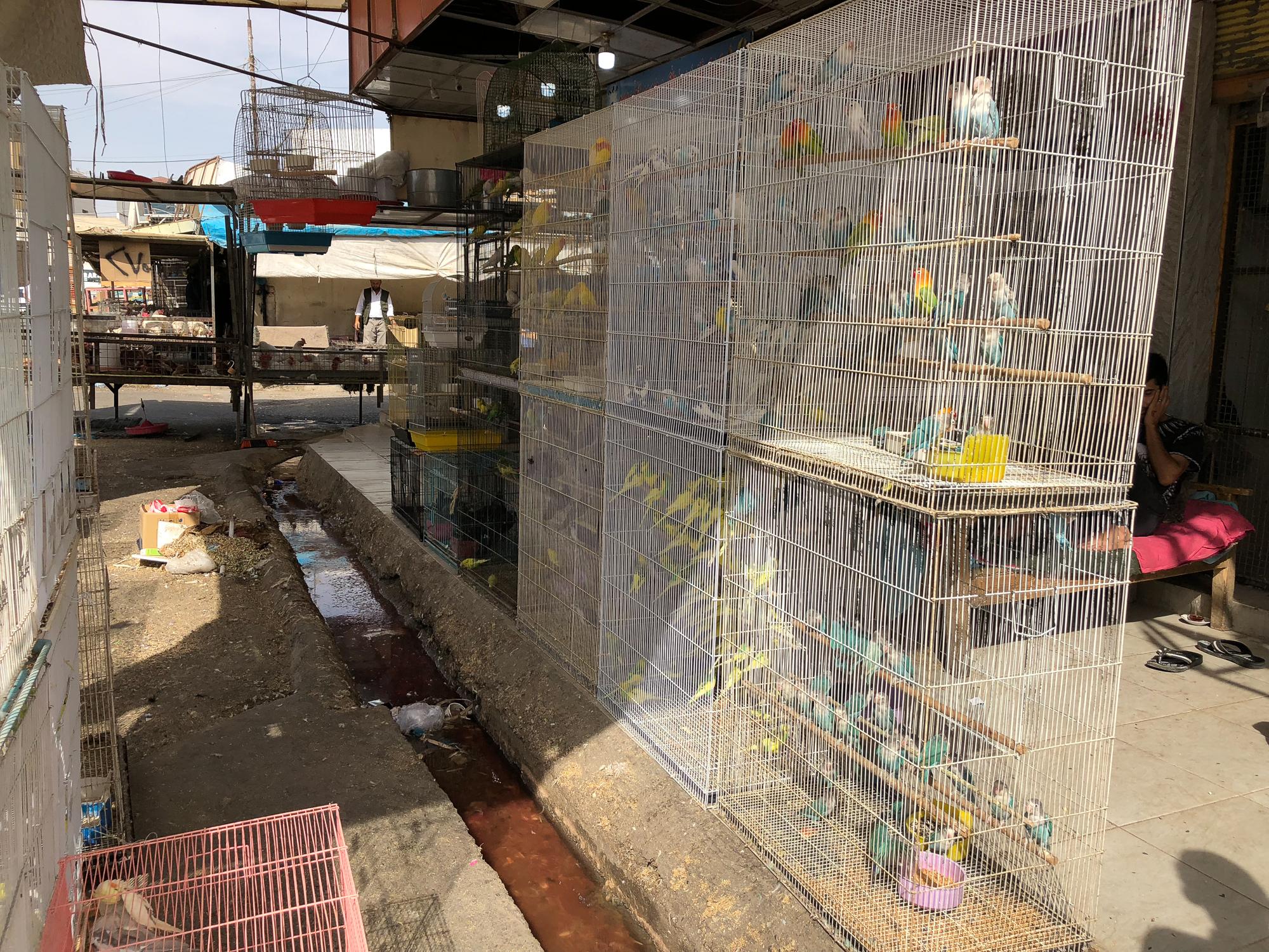 The bird bazaar in Erbil
