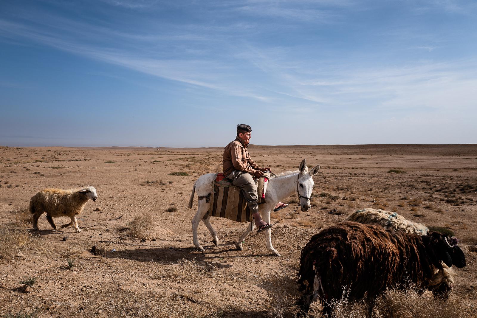 A shepard under the Sinjar mount