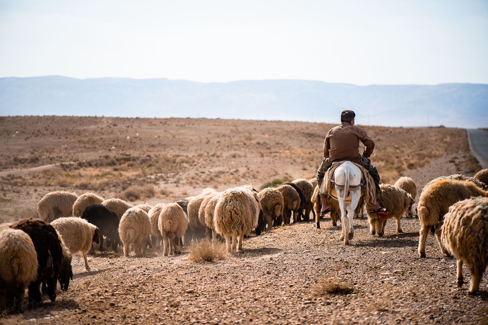 A shepard with the Sinjar mount on background