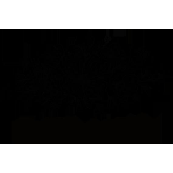 Katie Logo transparent Favicon.png