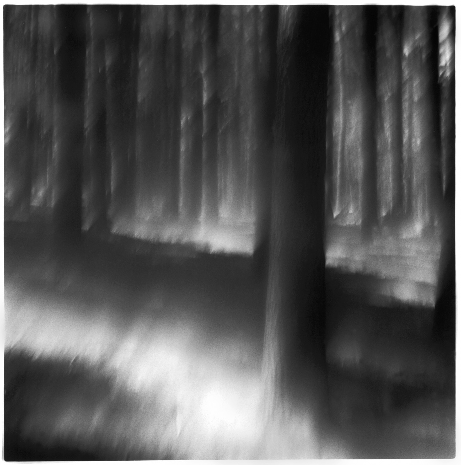 LIGHT IN THE FOREST, web.jpg