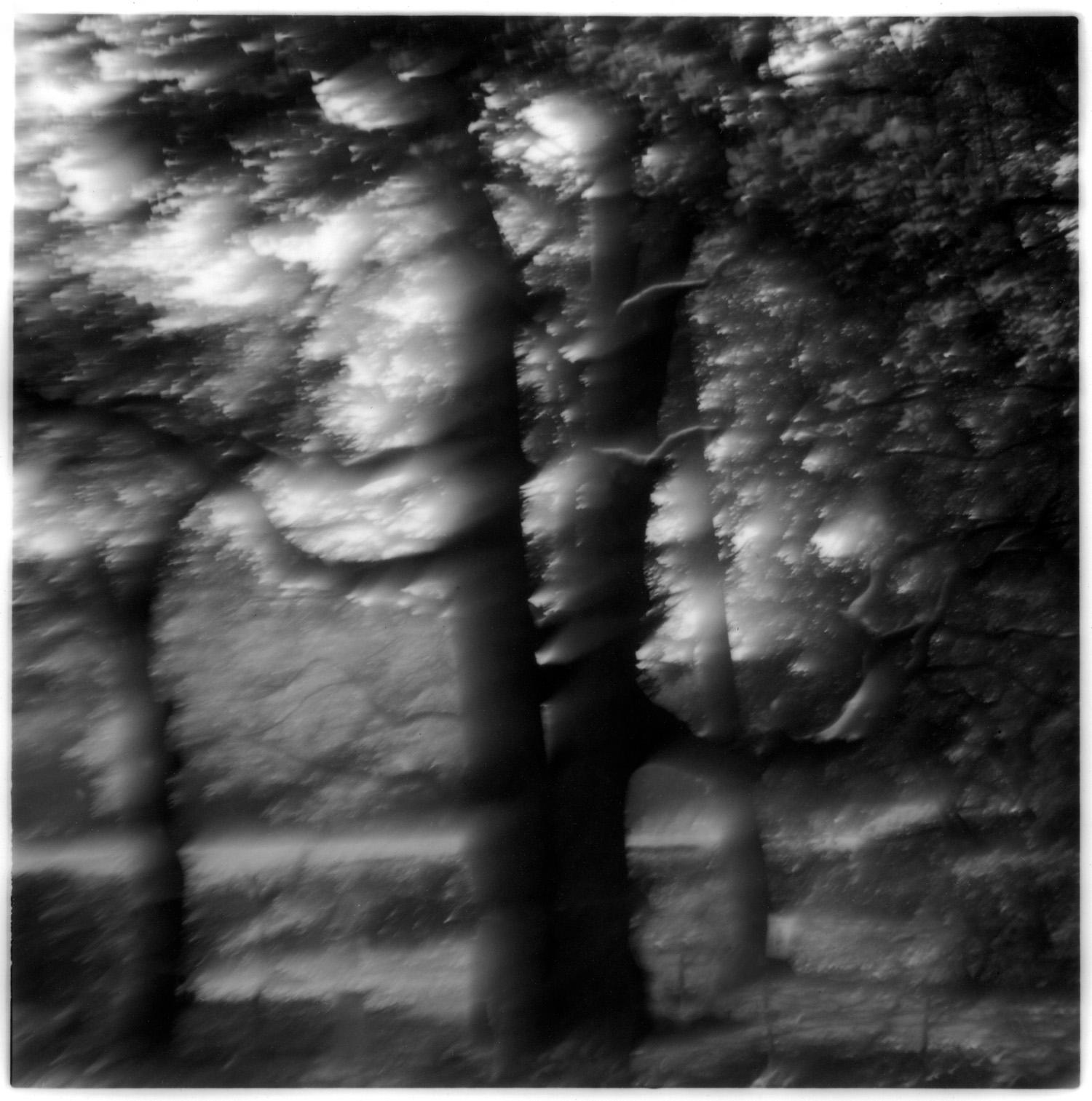 FANTASY FOREST, web.jpg
