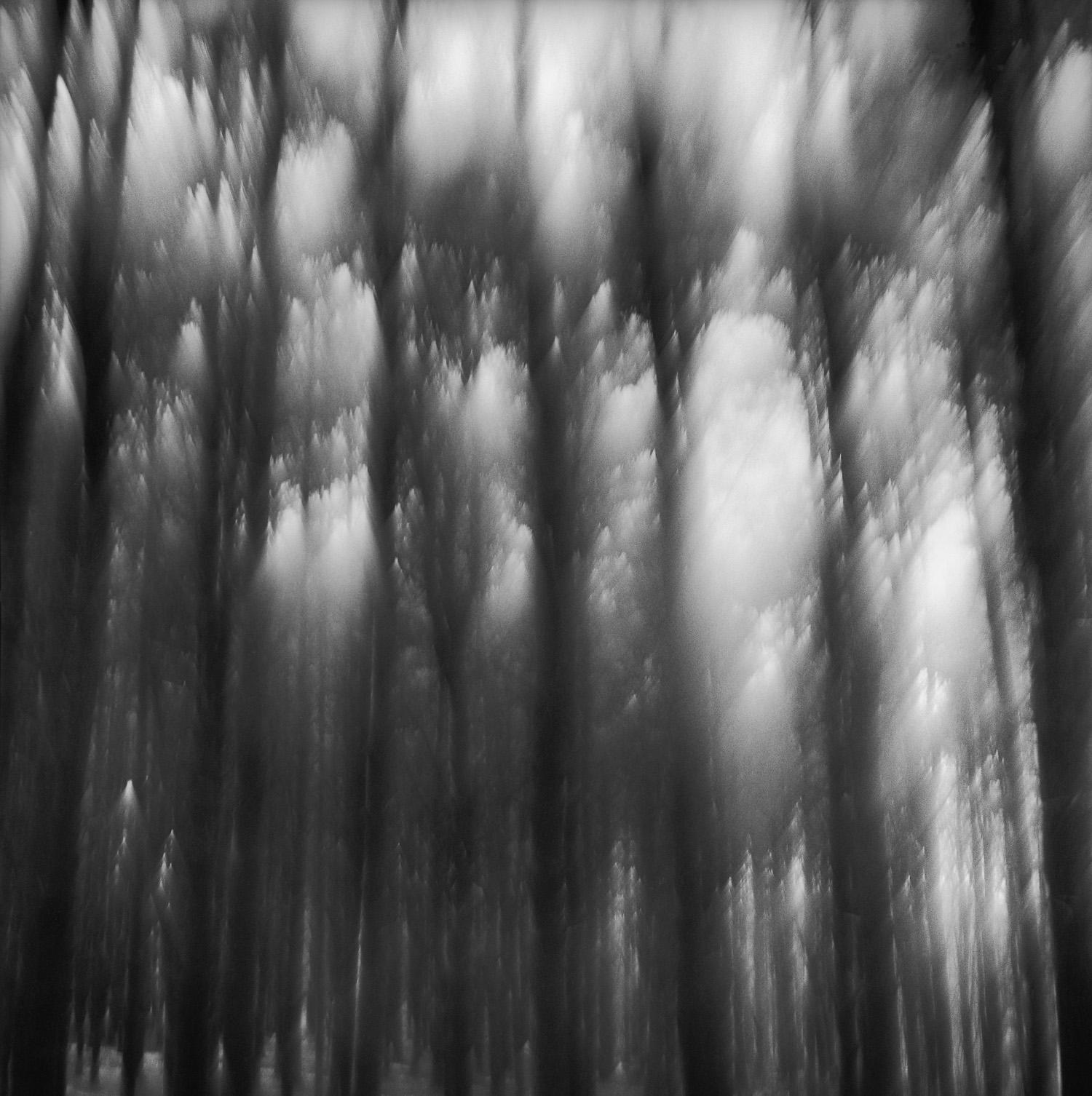 FANTASY FOREST TOPS, web.jpg